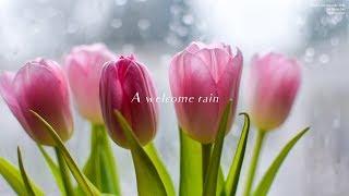 [단, 하나의 사랑 Angel's last mission : love] 이문세 LEE MOON SAE - 단비 A welcome rain | Piano cover