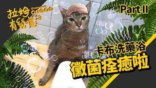 Treat ringworm:  Bathing the cat |LAMUNCATS ♤