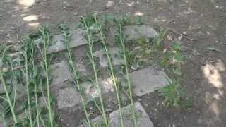 making backyard rope