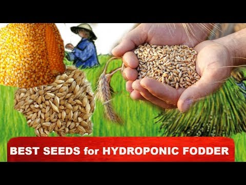 Ashwin Sawant | Best Seeds for Hydroponic Fodder