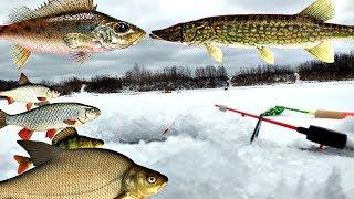 Какая рыба клюет в декабре на кубани