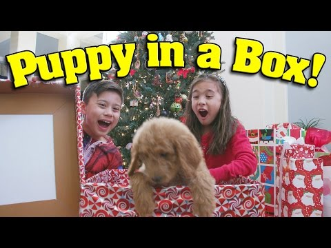 PUPPY IN A BOX!!! Christmas Haul & Surprise Unboxing Ft. PuppyTube! What We Got For Christmas!