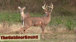 AWESOME HEART SHOT....Ravin Crossbow vs Whitetail Buck