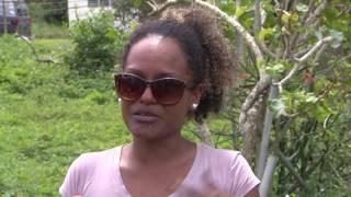 Sin esclarecer asesinato en Arecibo