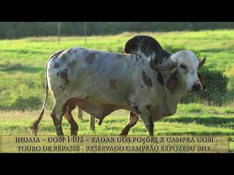 Indaia DOBI - DOBI 1402