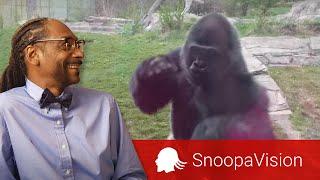 When a Silverback Attacks in SnoopaVision