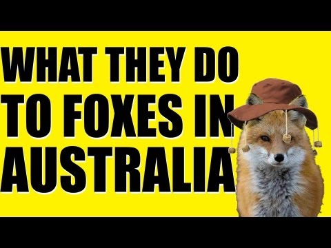 Fieldsports Britain – What they do to foxes in Australia