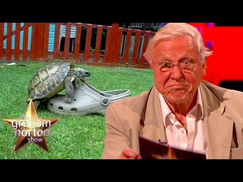 David Attenborough komentuje video s želvou - The Graham Norton Show