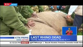 Last of the 11 rhinos translocated to Tsavo dies