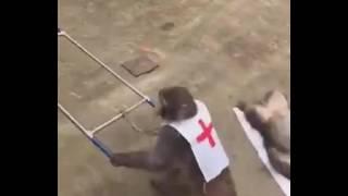 Маймылдар прикол. Обезьяны 😃😃😃😃😃 2017  хит  Приколы