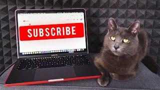 Pozri si moje prvé video inak budem agresívna - Mačka Jackie