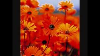 Wildflowers ♥ Tom Petty