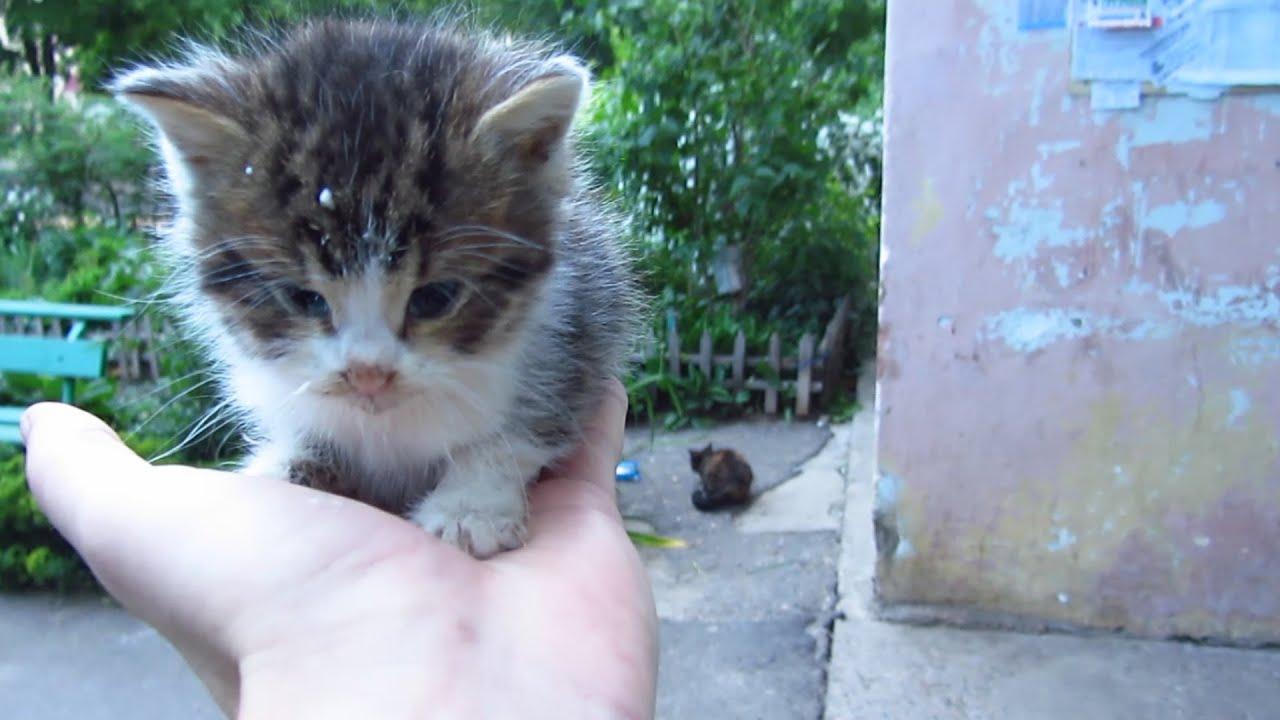 Kitten sitting on a hand