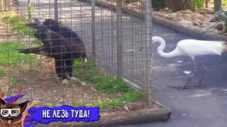 Лучшие Приколы Недели Октябрь 2016    Смешное Видео Корпорация Зла