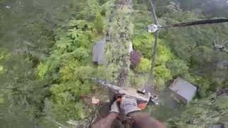 Pine dismantle, lowering & rigging: