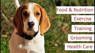 Beagle 101 - Feeding, Training, Exercise, Grooming & Health Care of a Beagle