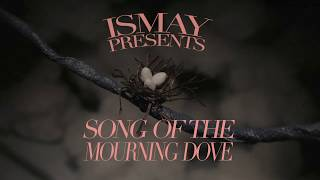 Original Stop-Motion Video, 'Song of the Mourning Dove' premiers today!