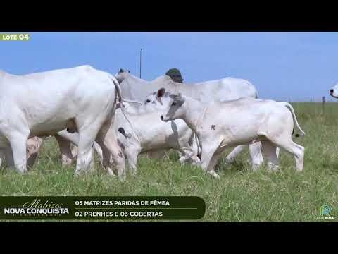 05 MATRIZES PARIDAS - 02 PRENHES E 03 COBERTAS