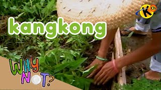 Extracurricular | Kangkong | Why Not?