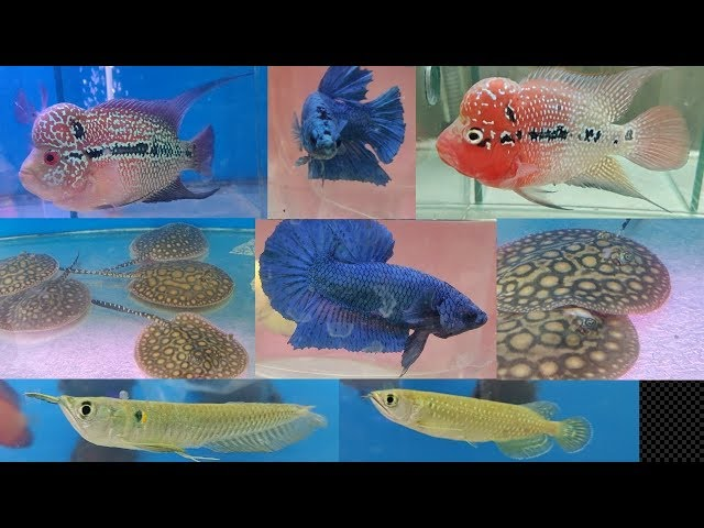 New Year New Fish at Naaz Aquarium Fish Store