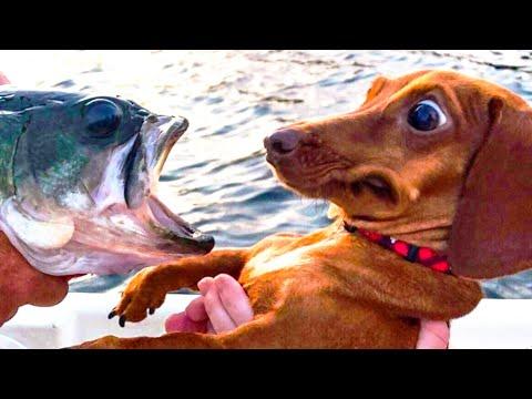 A Hilarious Animal Compilation Video