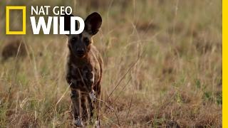 Hunting Readiness 101 | Destination WILD