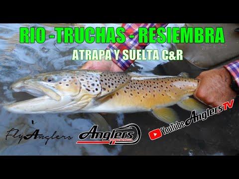 Conservando el Río de Truchas Resembrando / Fly Fishing México Truchas Silvestres 18