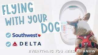 Everything You Need to Know Before Flying with your Dog