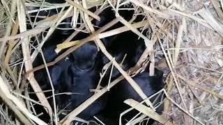 Jeremya's Babys - es rappelt im Nest ❤️