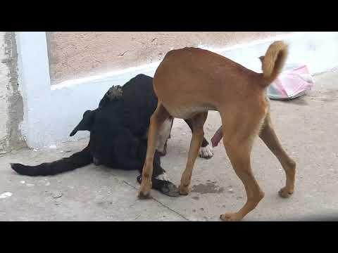 Veja o que esta mulher faz com seu cachorro!