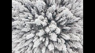 Skiing in between the winter trees of Mt. Hood