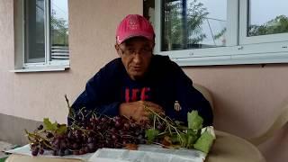 Кому нужен виноград?