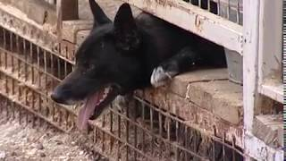В Ярославле растёт количество жалоб на стаи бездомных собак