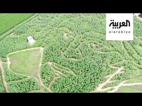 العرب اليوم - شاهد: مزارعون ألمان يحيون ذكرى الموسيقار العالمي بيتهوفن بطريقة عجيبة