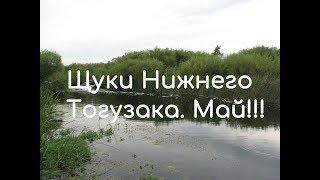 Клев рыбы в варне челябинской области