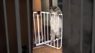 Cachorros e gatos engraçados 03 #shorts