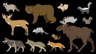 North American Forest Mammals - Forest Animals - The Kids Picture Show (Fun & Educational)