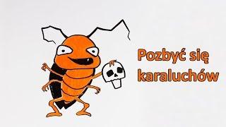 Dlaczego tak trudno pozbyć się karaluchów?