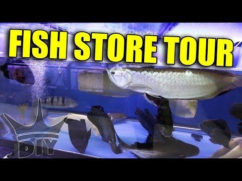 MONSTER AQUARIUM - fish store tour