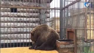 Медведица Маша уехала в Москву