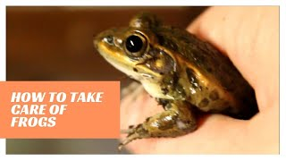 How to take care of frogs || How to take care of frogs for a pet