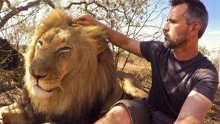 Brushing Bongani | The Lion Whisperer