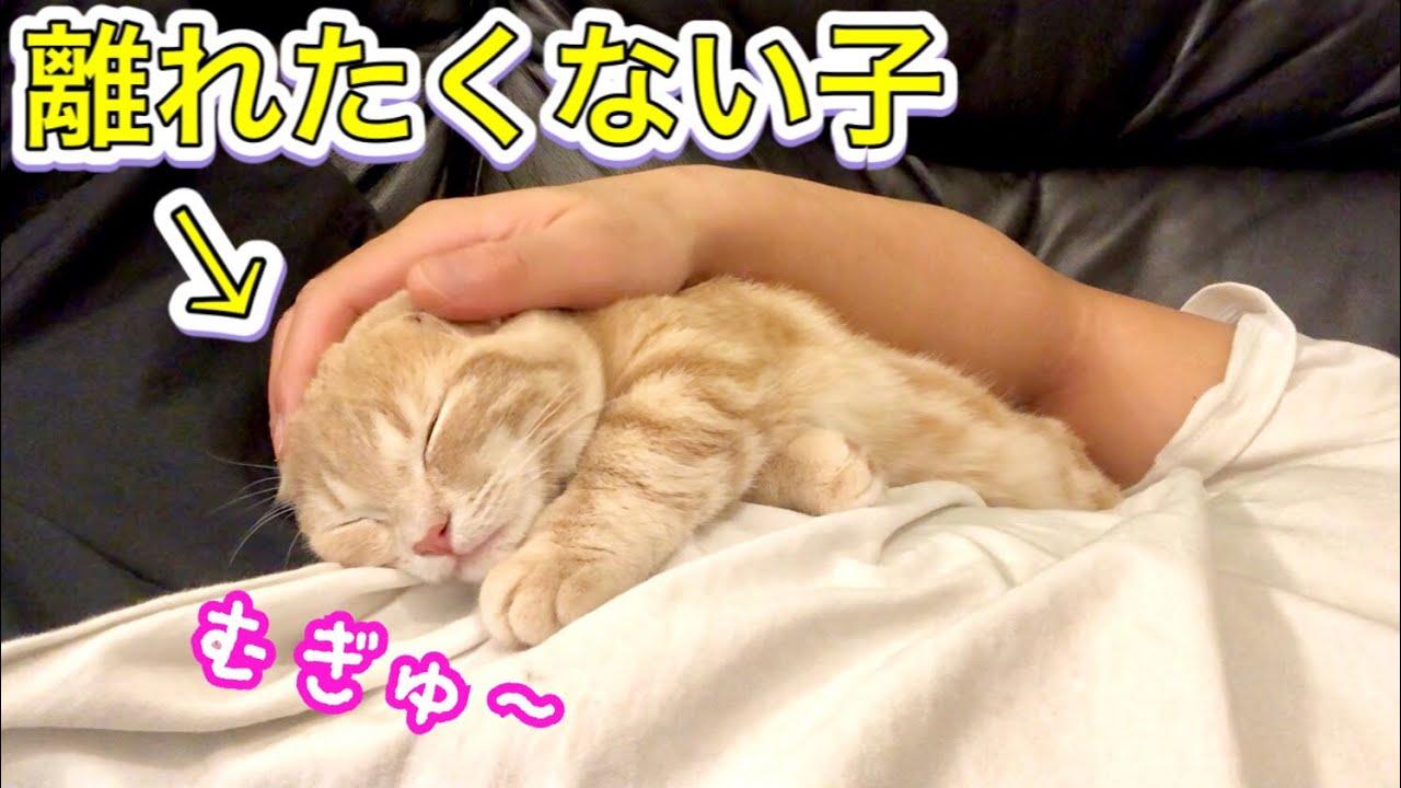 飼い主と離れたくない子猫が可愛すぎたので添い寝してみたら...