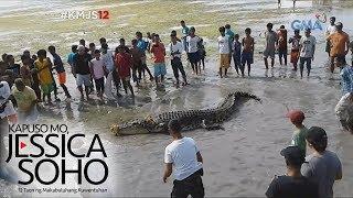 Kapuso Mo, Jessica Soho: Higanteng buwaya, namataan sa Tawi-tawi