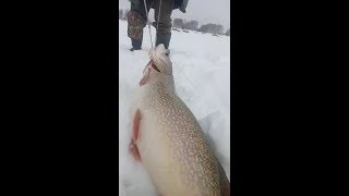 Зимняя рыбалка поймать щуку