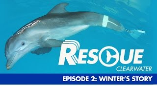 Winter's Story - Rescue-Clearwater Season 1: Ep. 2