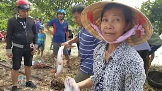Cả làng  xem kéo lưới những con cá Quái Vật ở Miền Tây