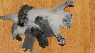 おかしい猫 - かわいい猫 - おもしろ猫動画 HD #80