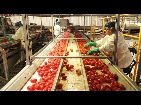 Industria argentina, tomates