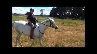 Out on the trails - Welcome to My World Tina Arena Horse riding for FUN SkipperCam